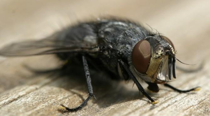 Glavinic über die Abenteuer einer Fliege